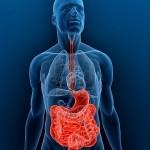 5287439-cuerpo-transparente-con-relieve-sistema-digestivo