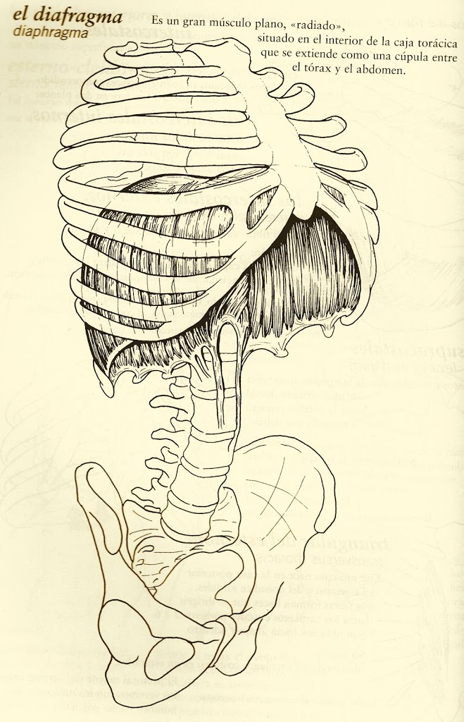 EL ABDOMEN: ubicación, topografía y relaciones anatómicas - Cristian ...