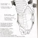 respiracion-1